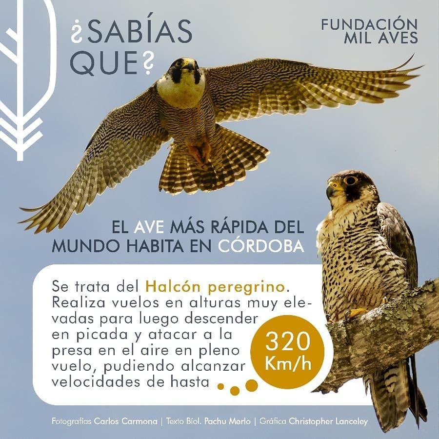 Pin En Aves Argentinas