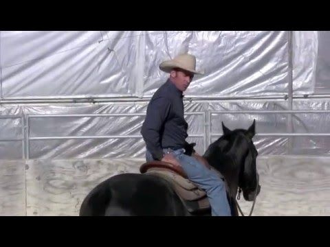 859bdd5fb8 Teaching a horse to steer part 2 - YouTube | Horse related | Horses ...