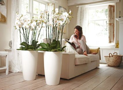 maybe even taller   Planters & vases   Pinterest   Planters and ...