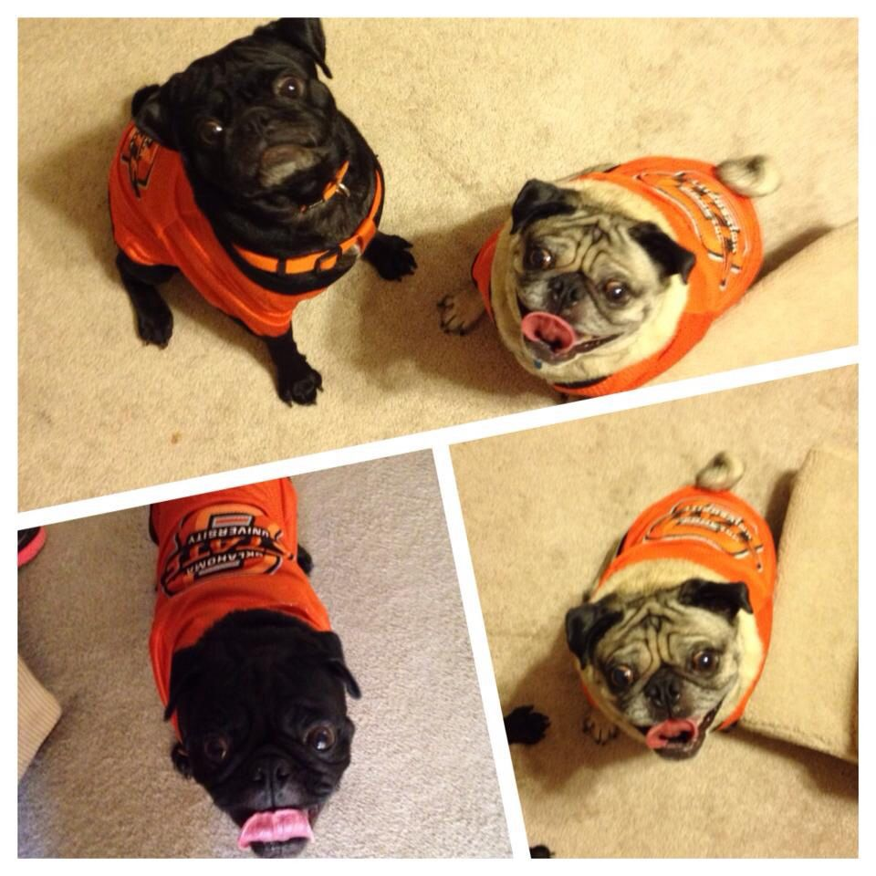 pistol pete and bullet love their new oklahoma state jerseys! o