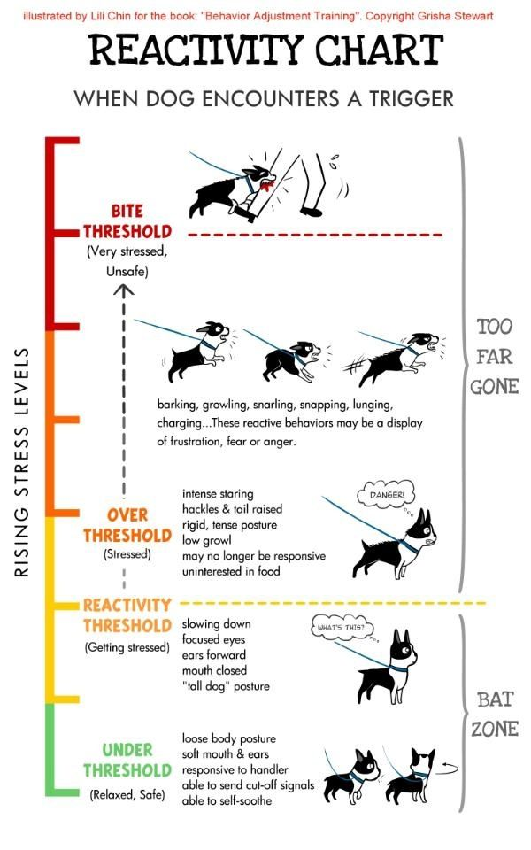 Dog Reactivity Chart Dog Training Aggressive Dog