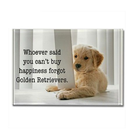 Happiness Is Golden Rectangle Magnet Dogs Golden Retriever Dog