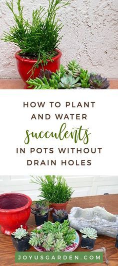 Photo of How to Plant & Water Succulents In Pots Witho
