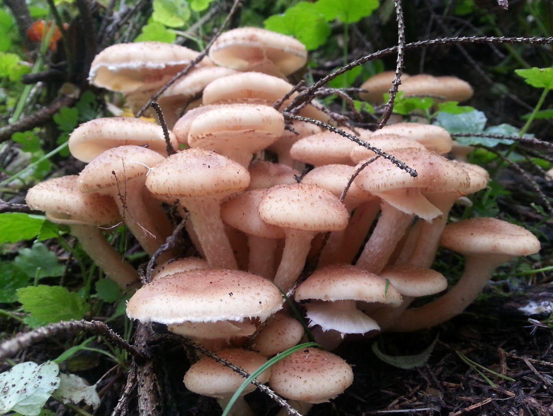 игровой аппарат грибы
