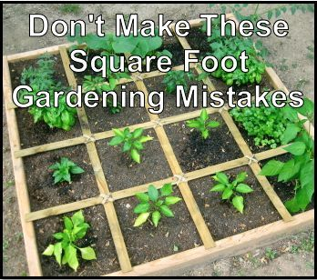Dont Make These Square Foot Gardening Mistakes Many new