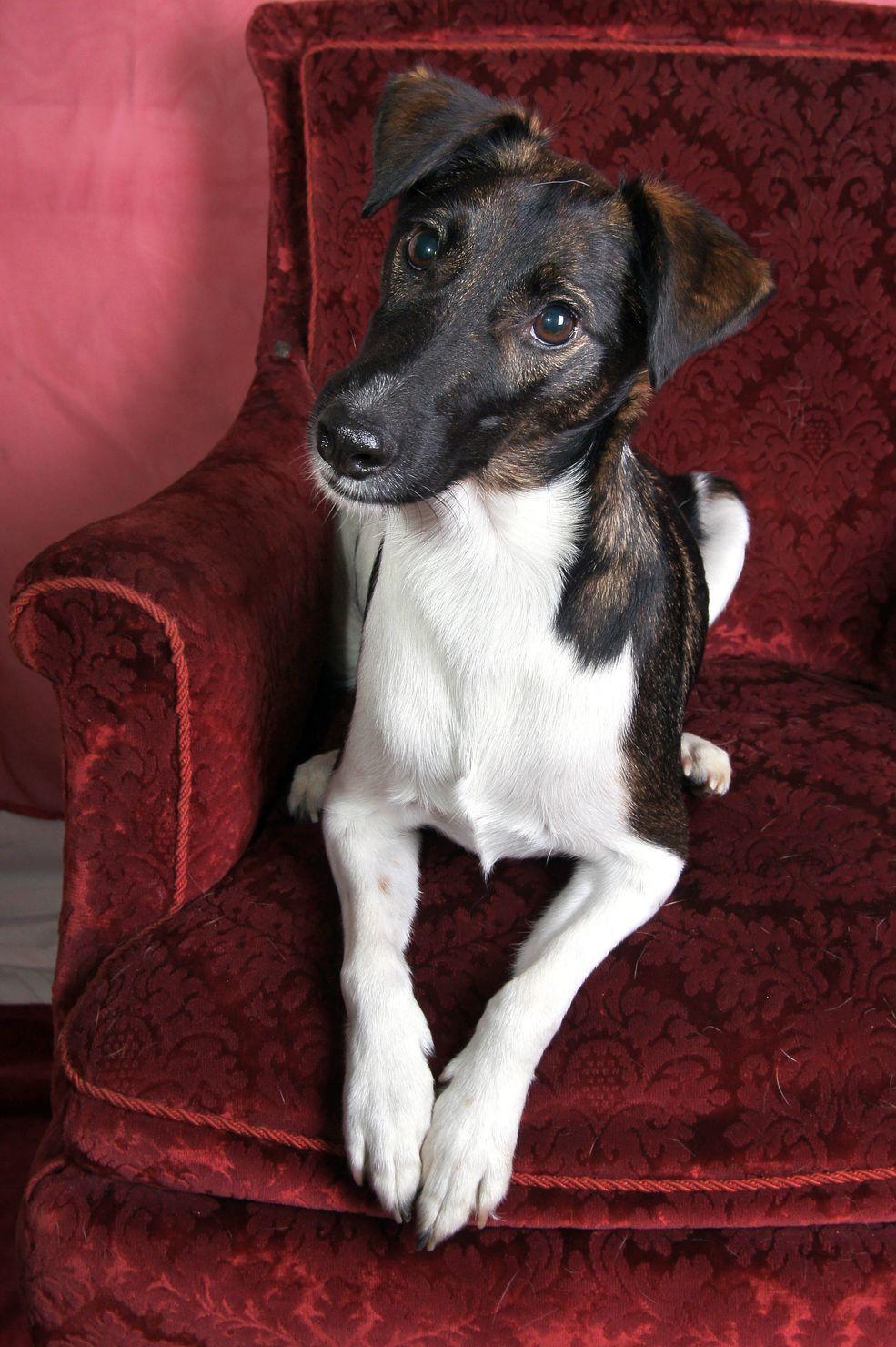 ✿⊱╮Elegantemente in posa per una foto in #poltrona #cani