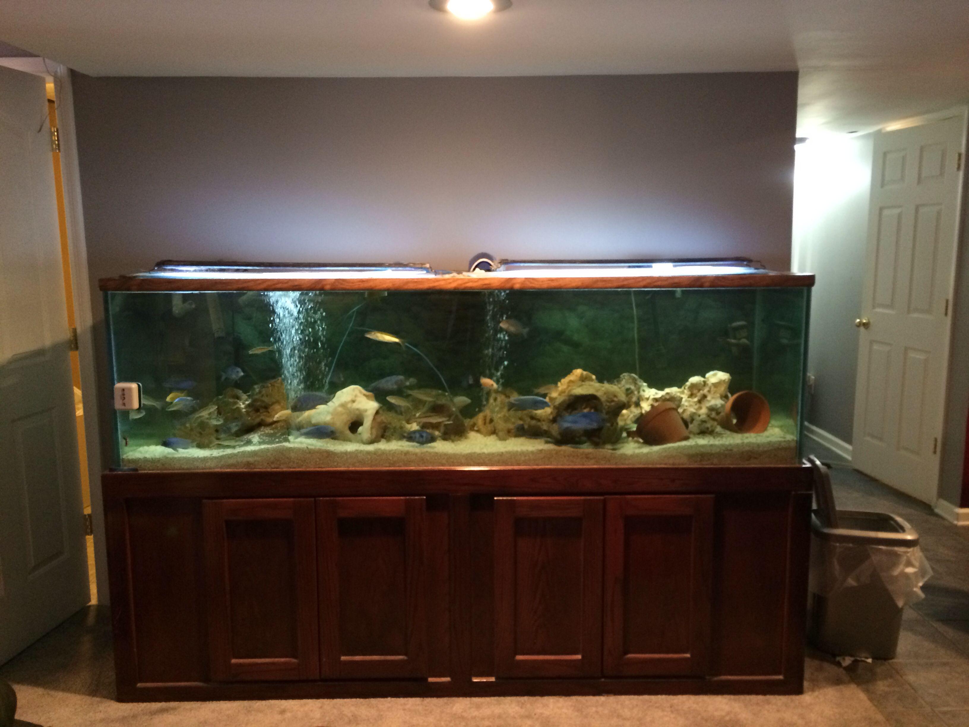 220 gallon African cichlid aquarium here in Louisville, ky ...