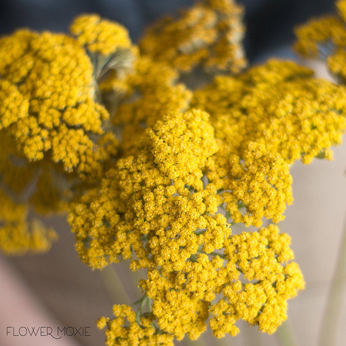 Yellow Yarrow Flowerdefault Title Yarrow Flower Tropical Wedding Flowers Flower Bouquet Wedding