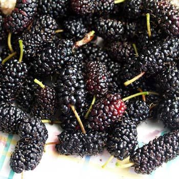 78a57b69a2 23 Amazing Benefits Of Mulberries (Shahtoot) For Skin, Hair, And ...