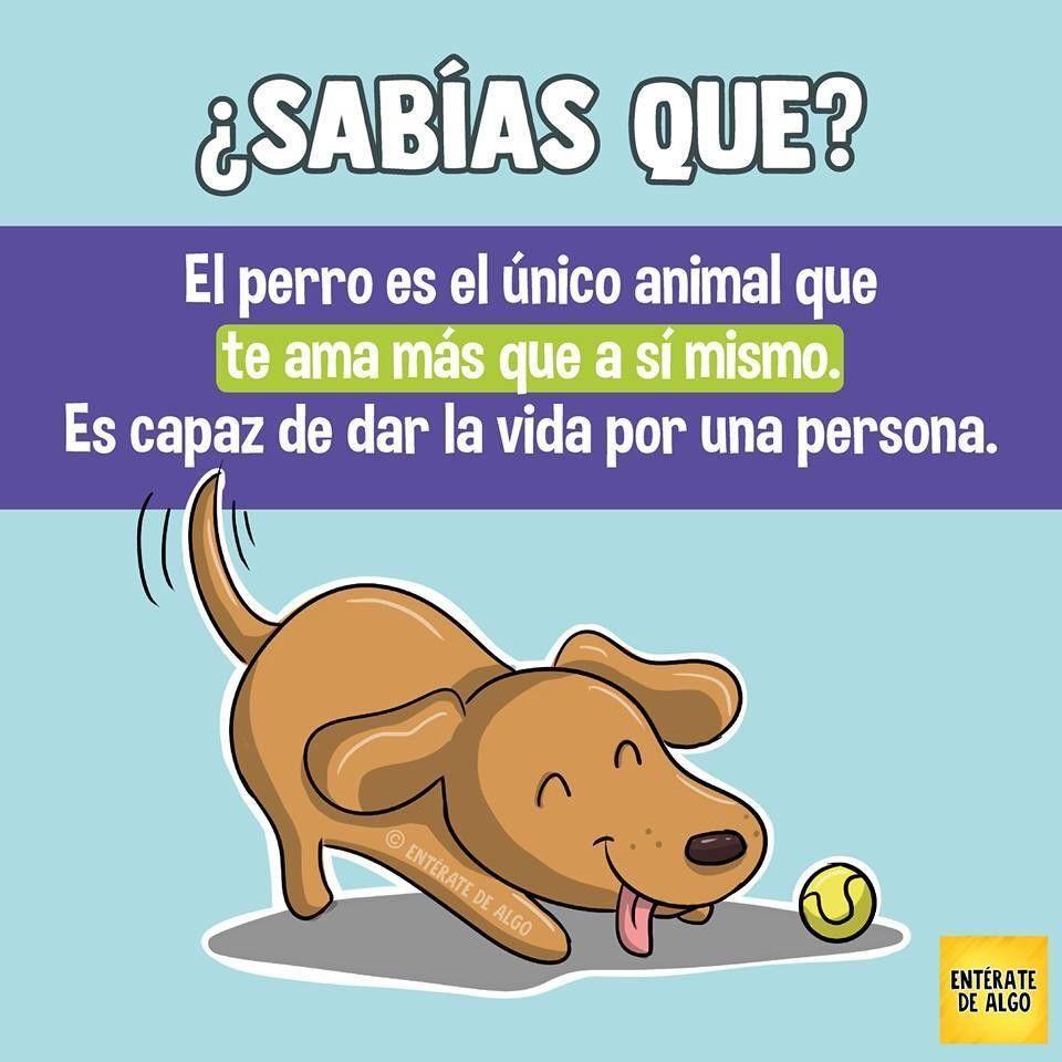 El Perro Datos Curiosos De Animales Sabias Que Datos Curiosos Consejos Para Mascotas
