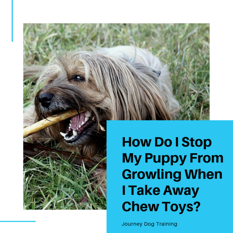 How Do I Stop My Puppy From Growling When I Take Away Chew
