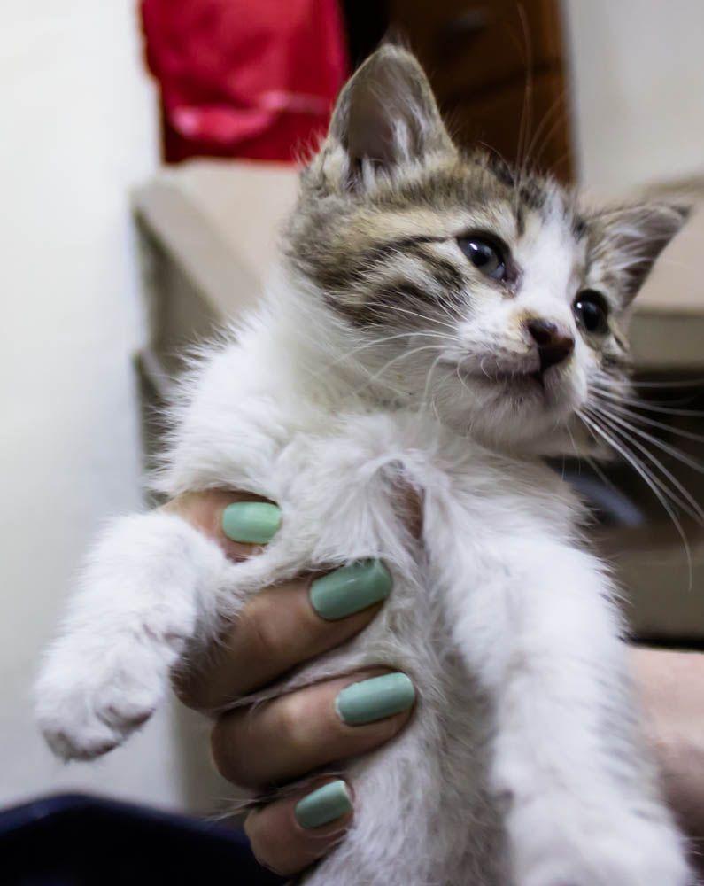 Kitten And Mint Nail Polish Mint Nails Mint Nail Polish Nail Polish