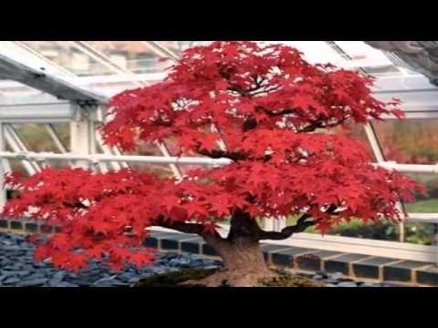 Tierra para el bonsai - YouTube