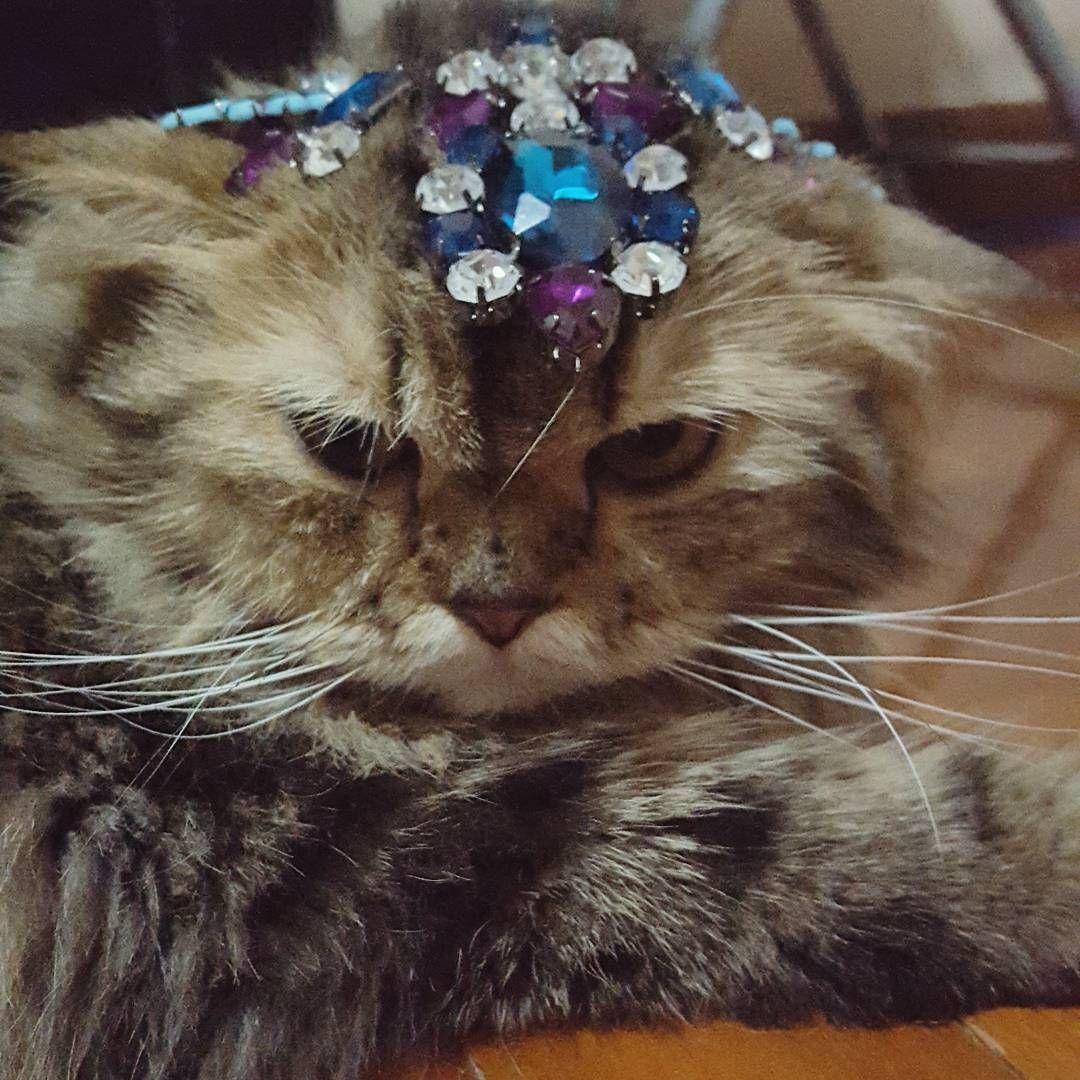 Morning Touyfu Cat Persian Persiancat Tabby Tabbycat Browntabby Pet Petlover แมว เปอร เซ ย แมว