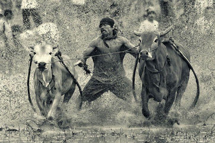 arnov11.  Bull racing