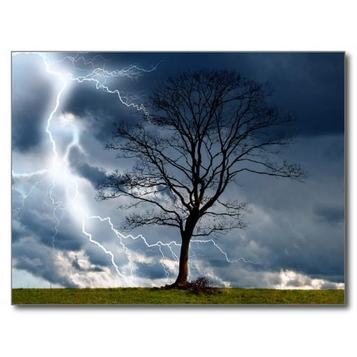 =>quality product          	Lone tree and lightning post card           	Lone tree and lightning post card in each seller & make purchase online for cheap. Choose the best price and best promotion as you thing Secure Checkout you can trust Buy bestThis Deals          	Lone tree and lightning p...Cleck See More >>> http://www.zazzle.com/lone_tree_and_lightning_post_card-239608787304359417?rf=238627982471231924&zbar=1&tc=terrest
