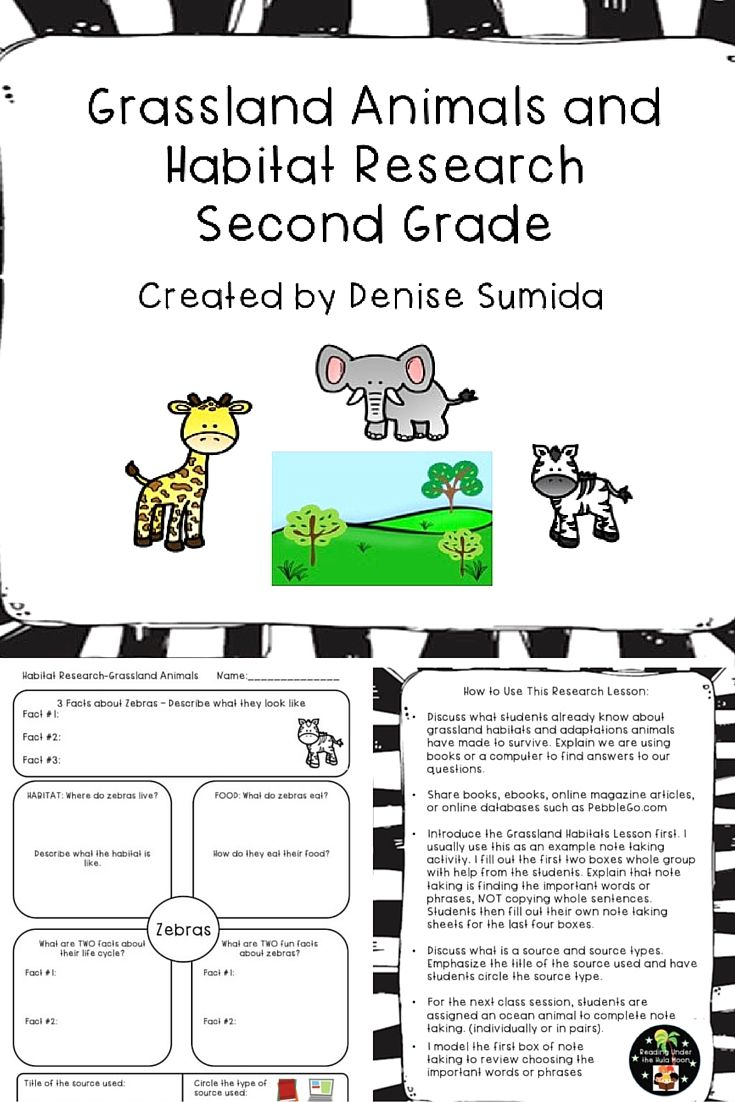 medium resolution of This is a great note taking lesson to teach about animals in grasslan…   2nd  grade reading passages