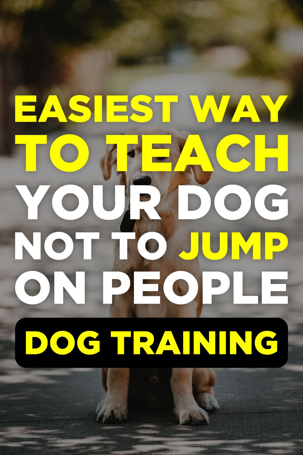 Brain Training For Dogs Review Dog Clicker Training Dog