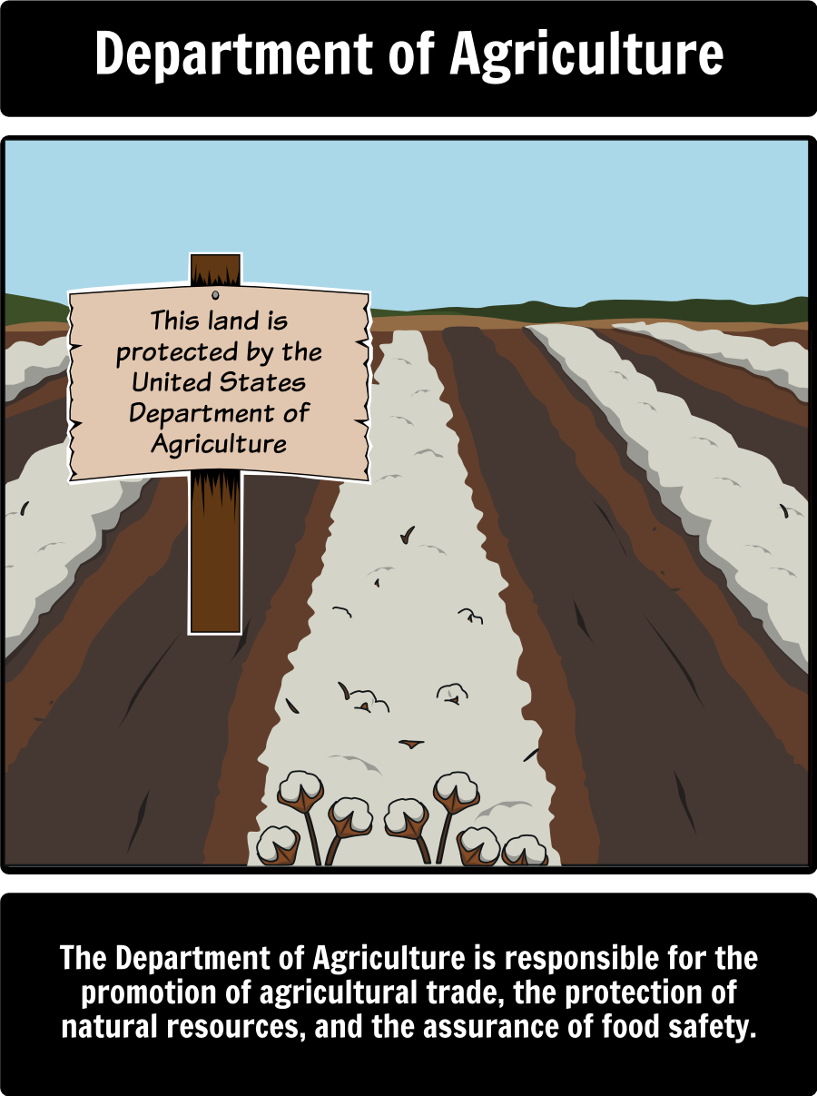 Executive Branch - The President's Cabinet: Create a Spider Map to ...