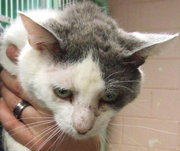 Adopt Gano On Petfinder Animals Cute Animals Adoption