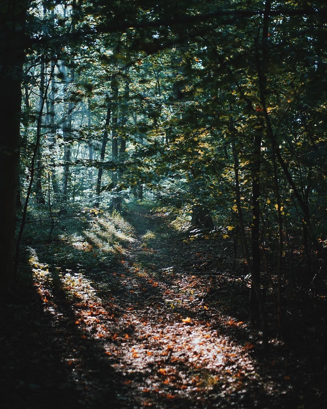 En lille udflugt til skoven, hvor en #allinone vil være en perfekt som en lille opkvikkende snack. #karenvolf #efterårsferie #skovtur