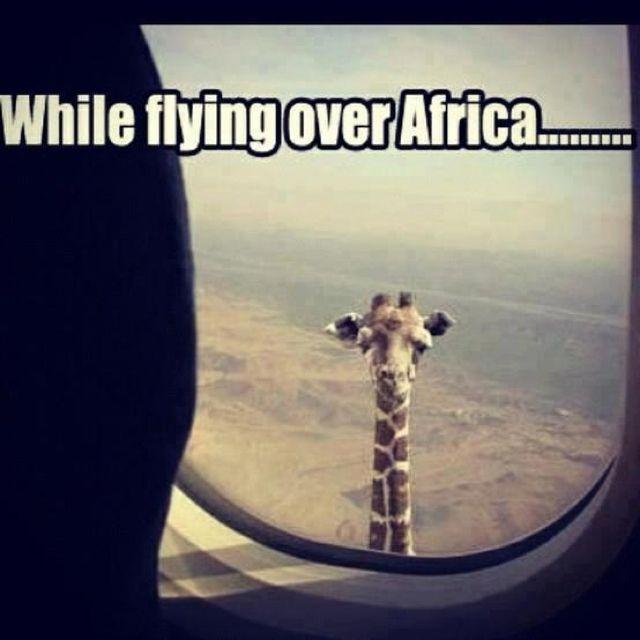 Africa:D