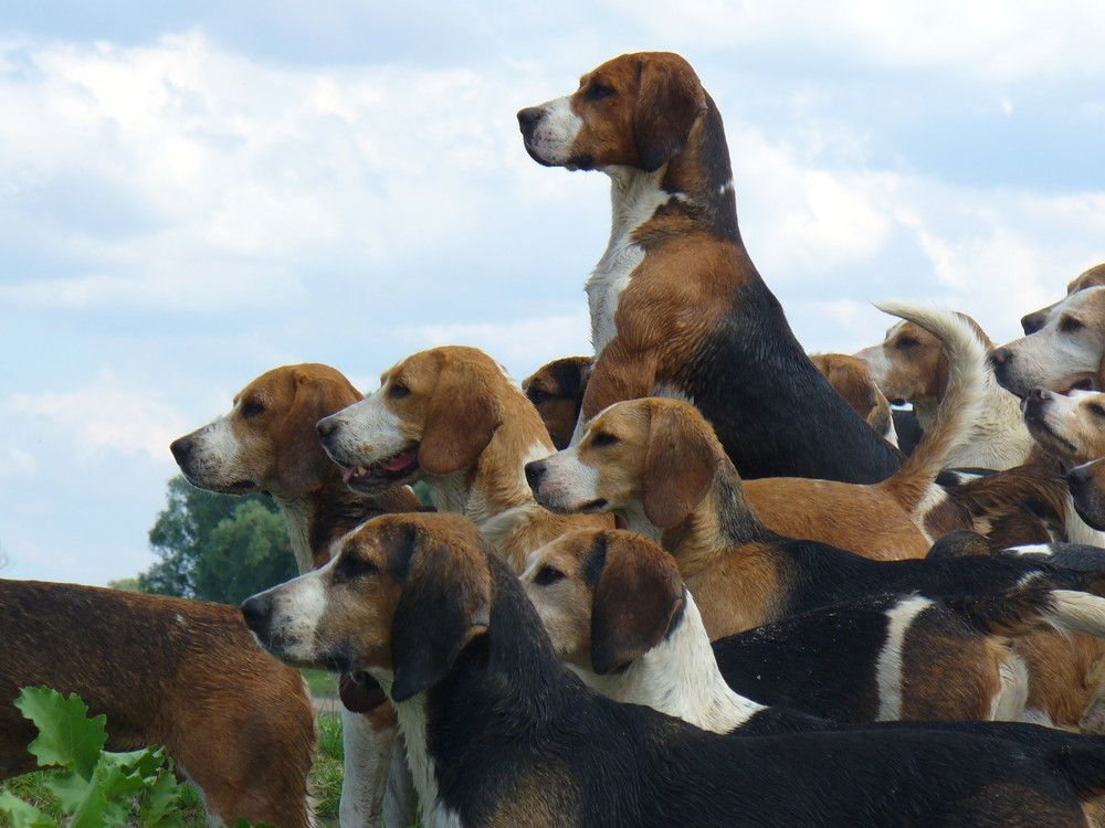 Pack O Beagles Click Here To Find Out More Baby