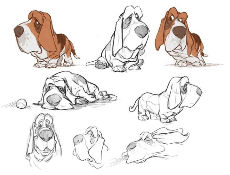 Картинки по запросу basset hound illustration | Cute stuff ...