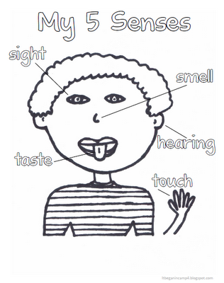 Kindergarten Science- All children should know their five