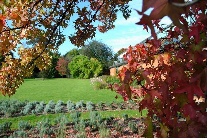 An Autumn shot looking out at our garden, with our protected trees, flowerbeds and lavender.
