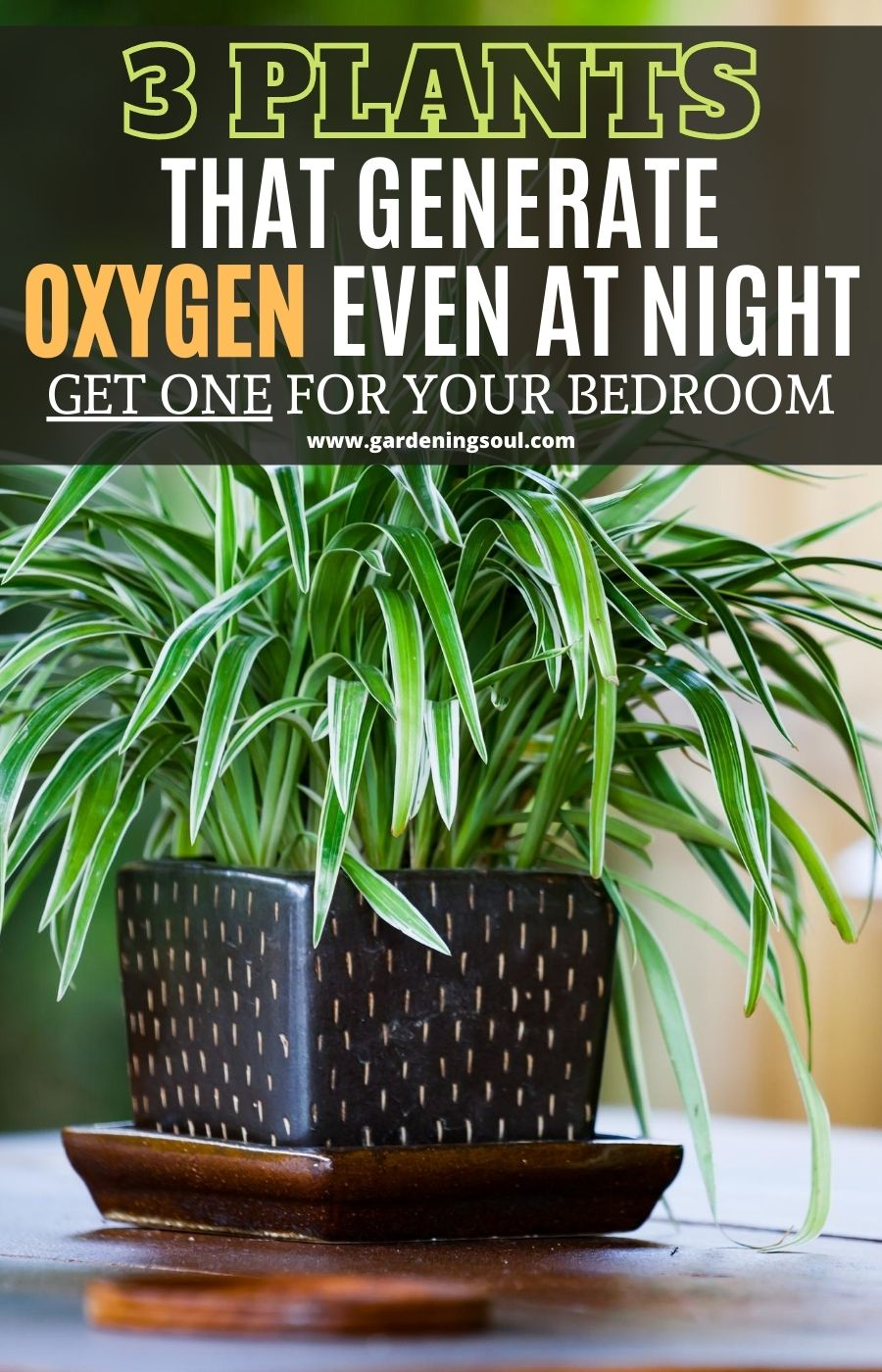3 Plants That Generate Oxygen Even at Night – Get
