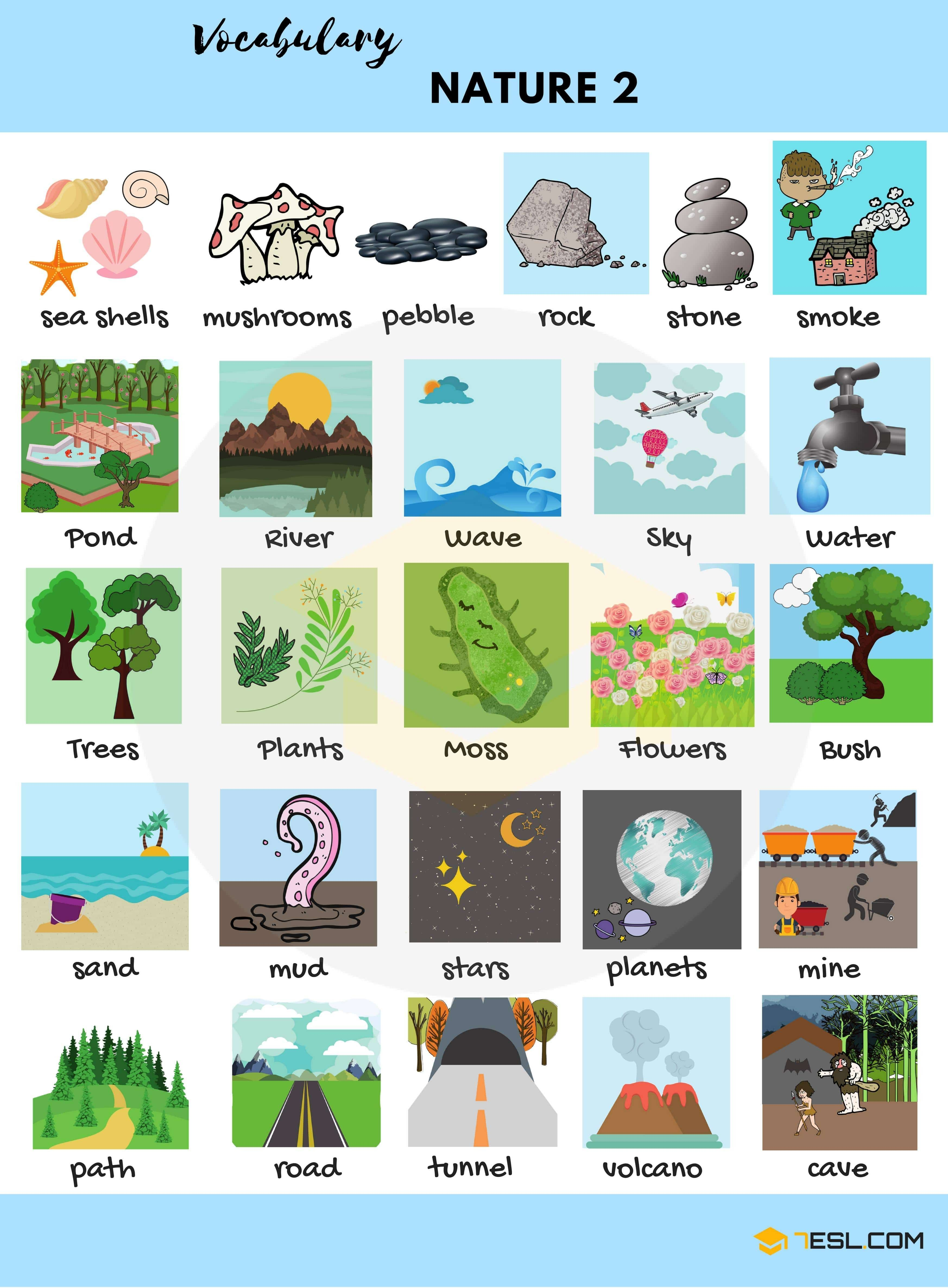 The Natural World Vocabulary In English With Pictures