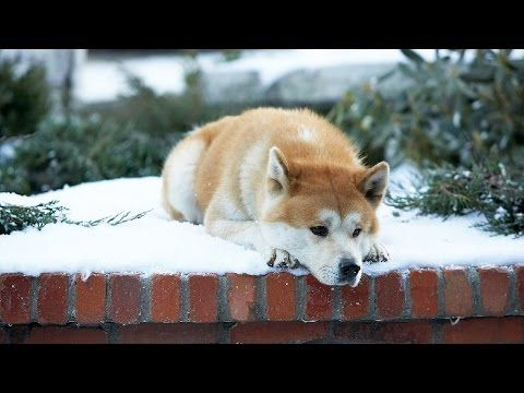 Hachiko A Dogs Story Music Video From Movie Youtube