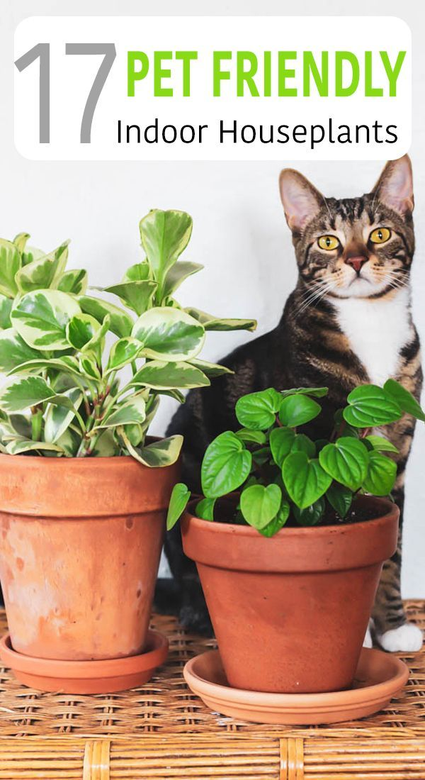 17 Indoor Plants That Are Safe For Cats And Dogs (With ...