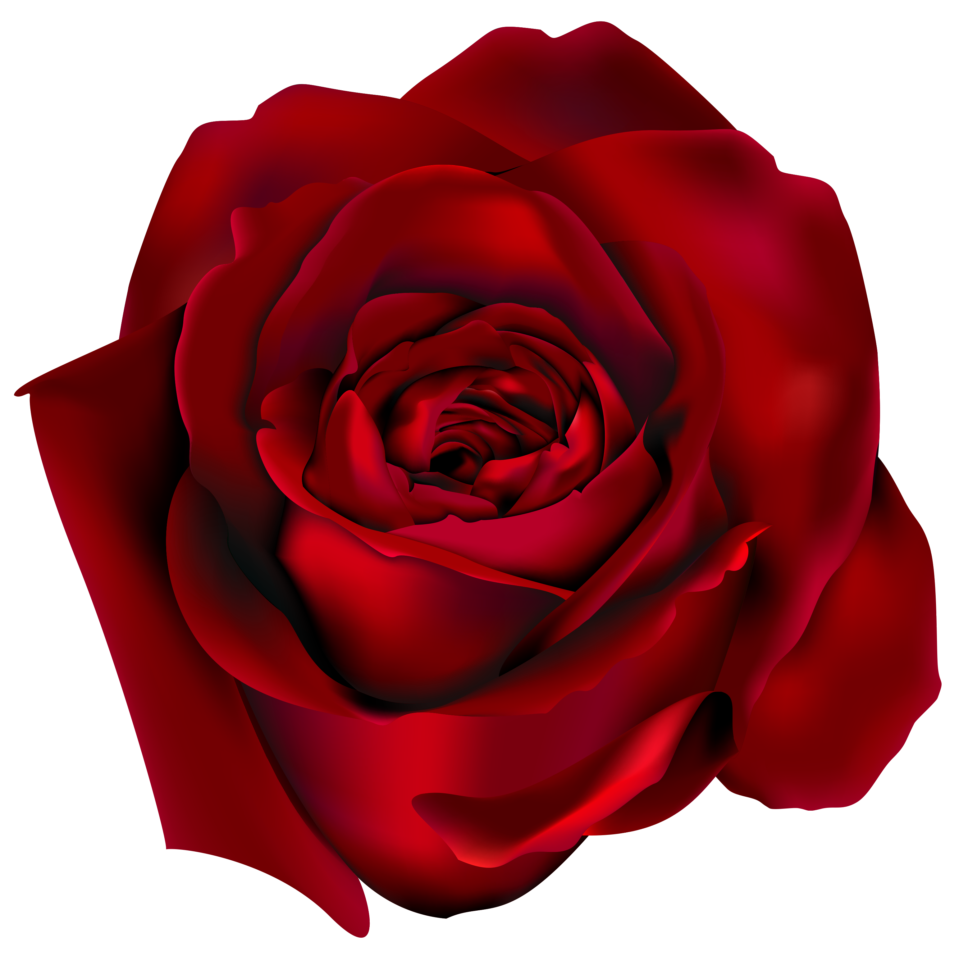 Transparent Red Rose PNG Clipart Picture | Red rose png ...