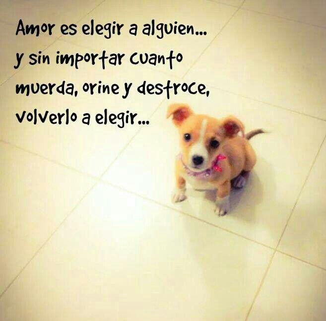 Amor Es Perros Perros Y Bebes Animales Frases