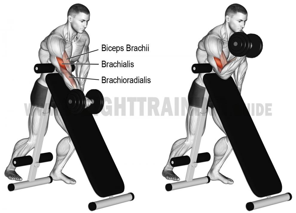 Comment Effectuer Le Curl Sur Banc Incliné Biceps Muscule