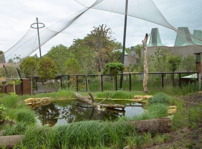 Zsl London Zoo Sumatran Tiger Enclosure Tensile Fabric