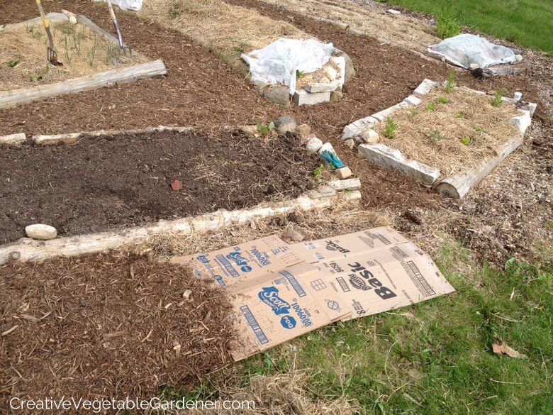 Benefits Of Marsh Hay As Mulch In Garden And Woodchips For Walking Path