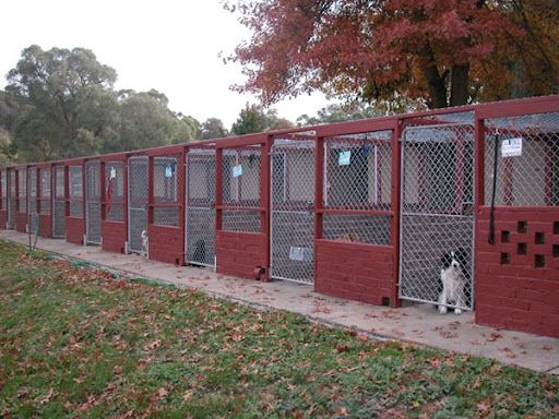Lots Of Money Here Brick Kennel