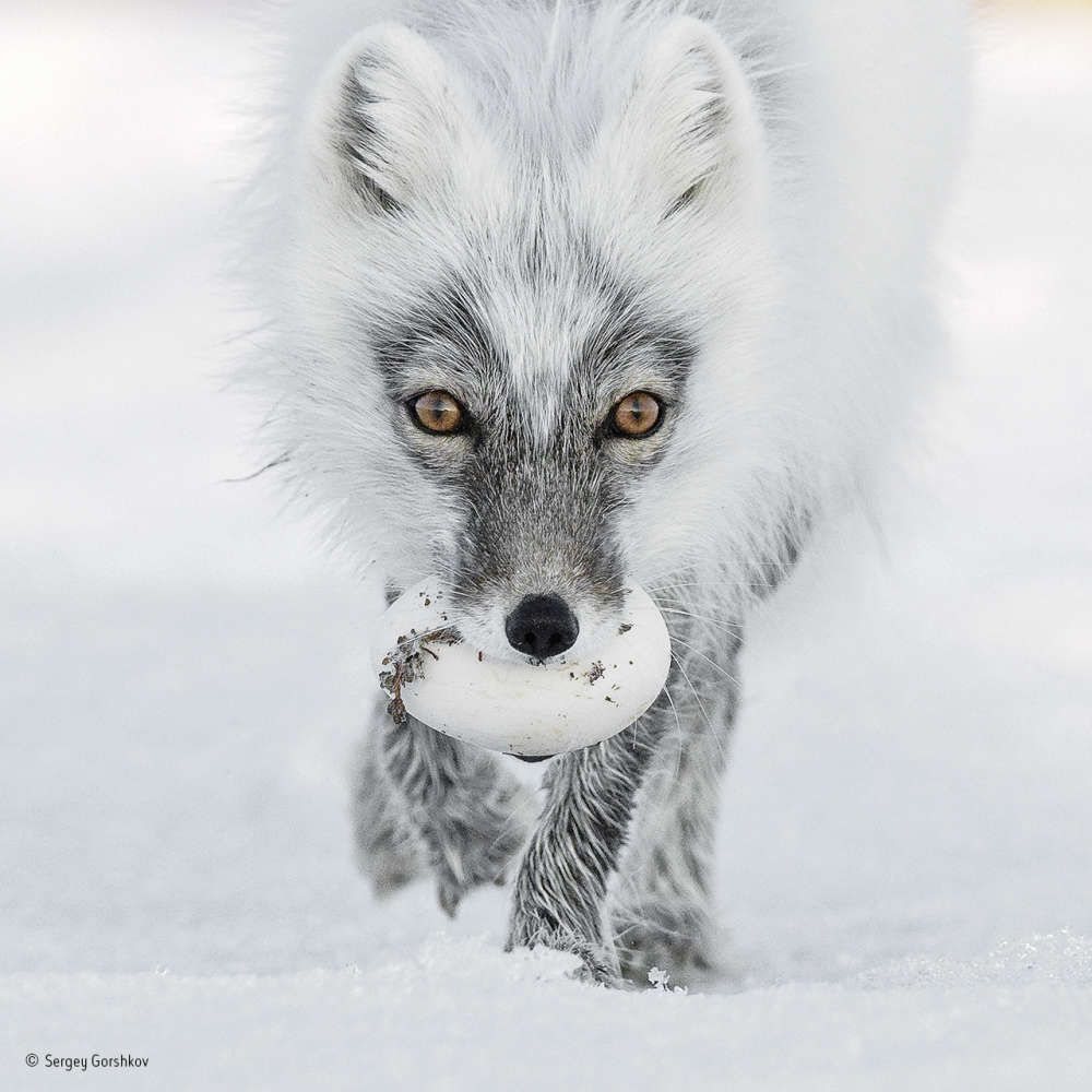 Check Out The Breathtaking Beauty Of Wildlife Photographer