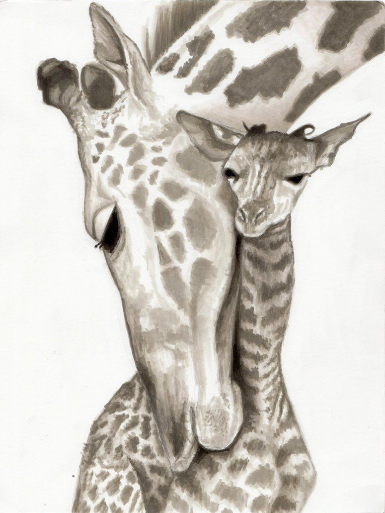 Baby giraffe pencil drawing 1000 images about drawing on for Giraffe draw something