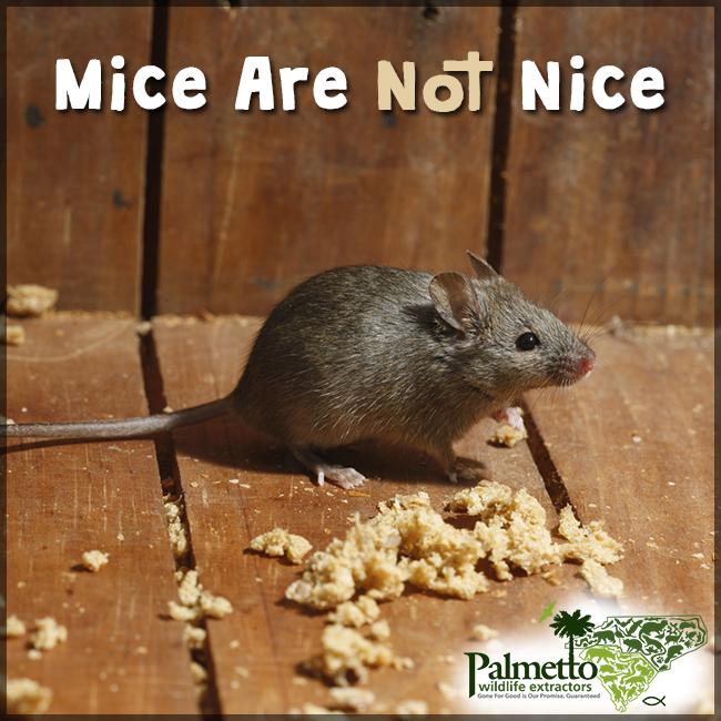 1043fc78a12d7ca4adba9c823338b40e - How To Get Rid Of Mice In Compost Bin