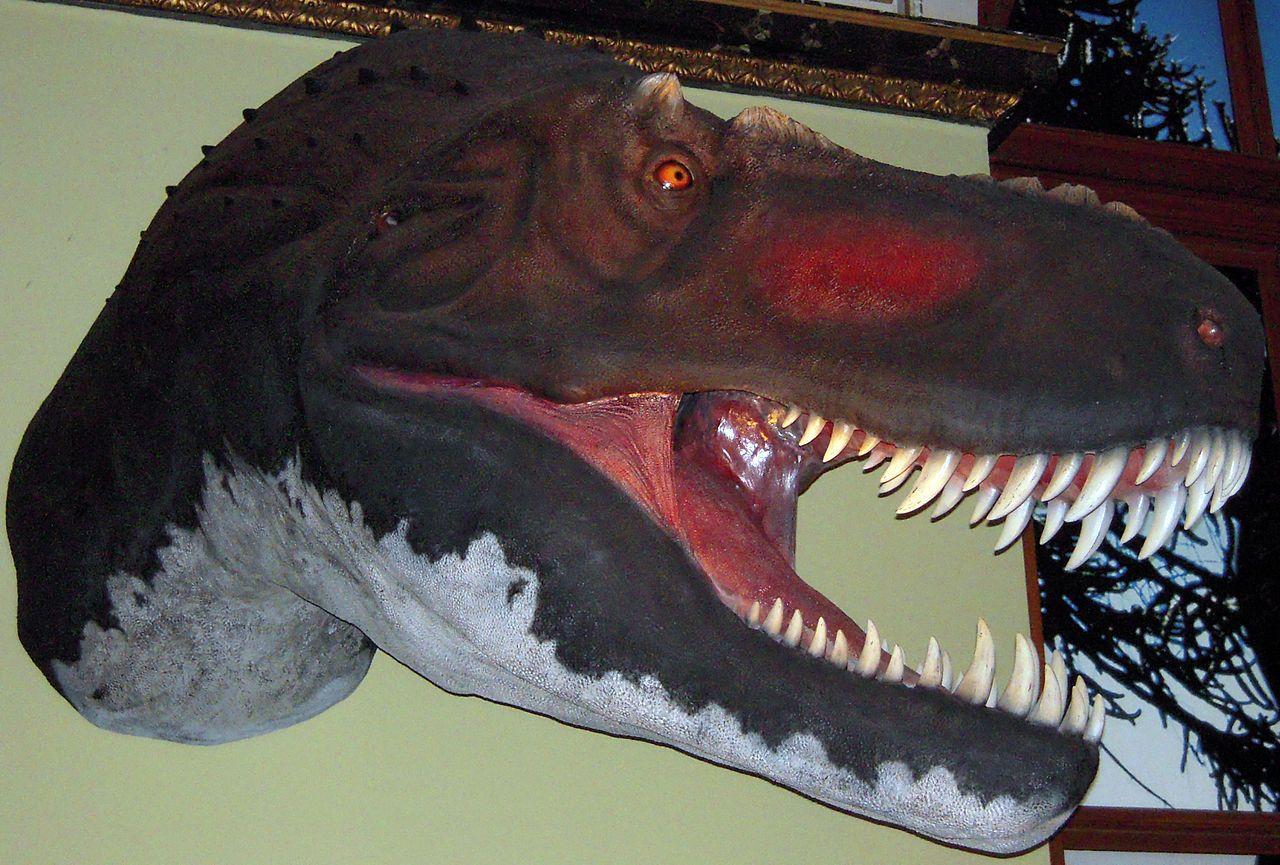 T.rex Schädel im Naturhistorischen Museum Wien (NHM Wien). Dinosauria, Saurischia, Theropoda, Coelurosauria, Tyrannosauroidea, Tyrannosauridae. Auteur : Domser, 2009.