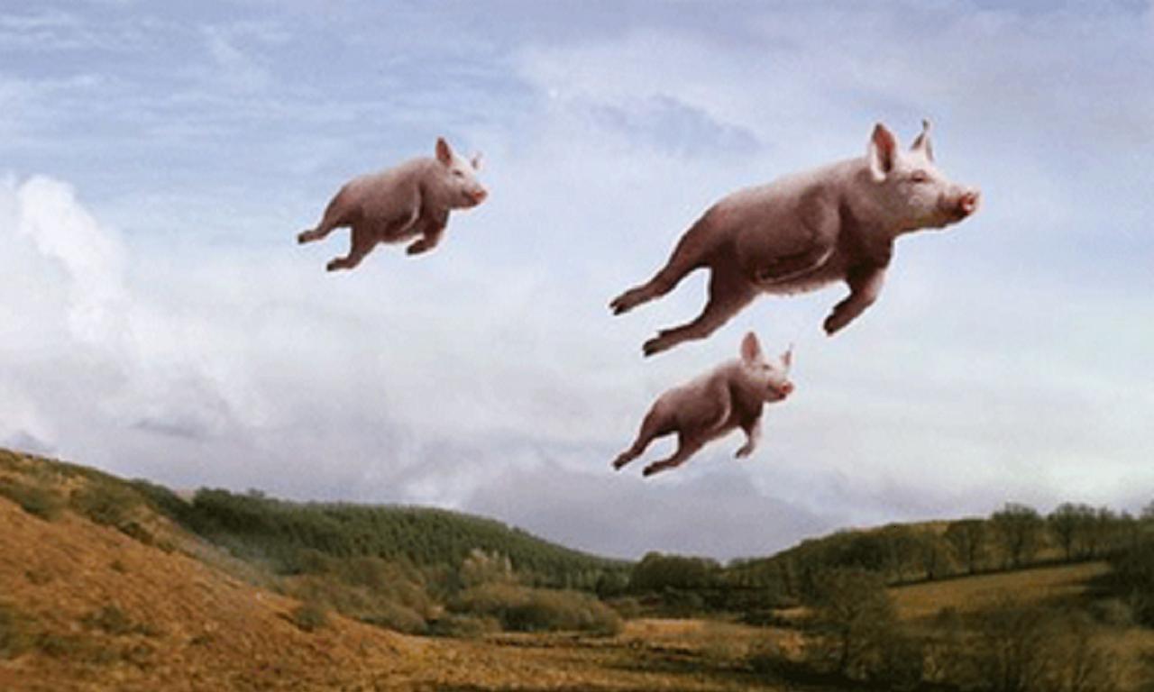 When Pigs Fly Whenpigsfly Pigsfly Flyingpig Pigmemes Kamisco