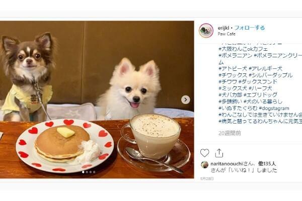 大阪 犬と行けるドッグカフェ人気おすすめ15選 おしゃれで可愛い店舗を紹介 Inunavi いぬなび 犬 いぬ 大阪
