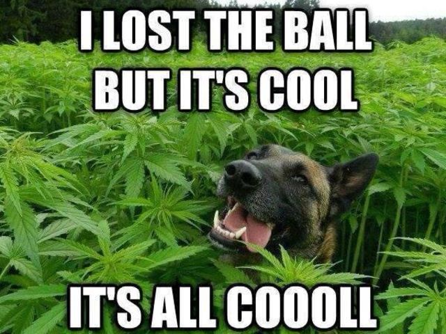 104445dec855890e79d847394fefc0a7 top 10 weed memes of 2014 cannabis, humor and memes
