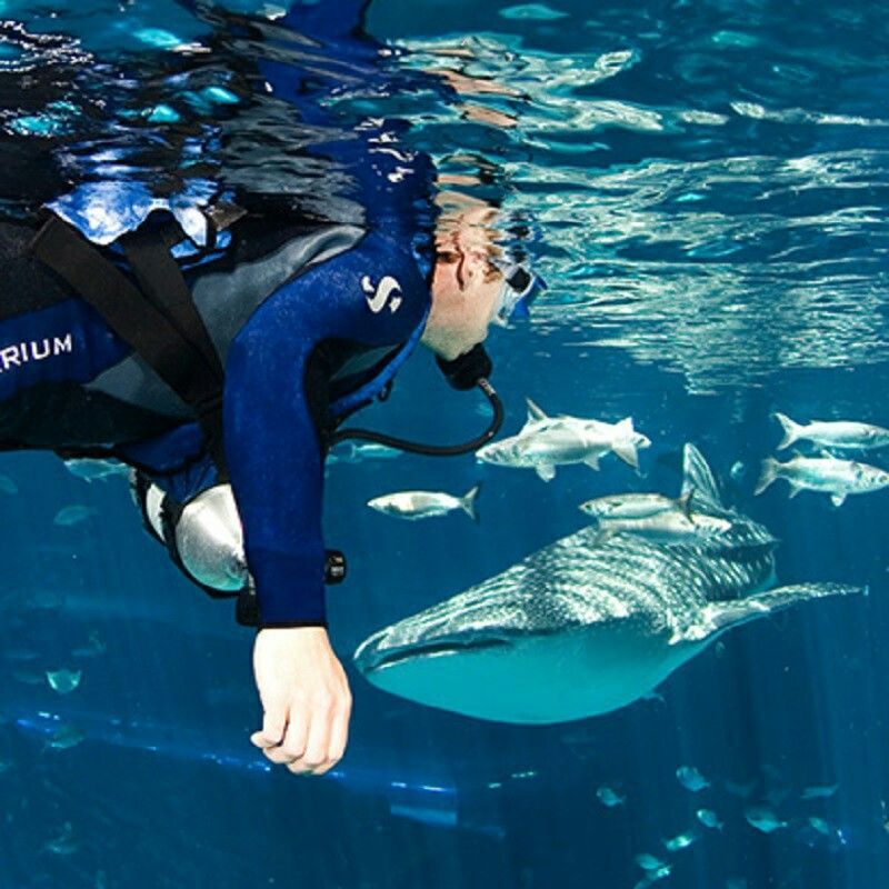 #Hobby #Hobbies #Scubadiving | Swimming with whale sharks ...