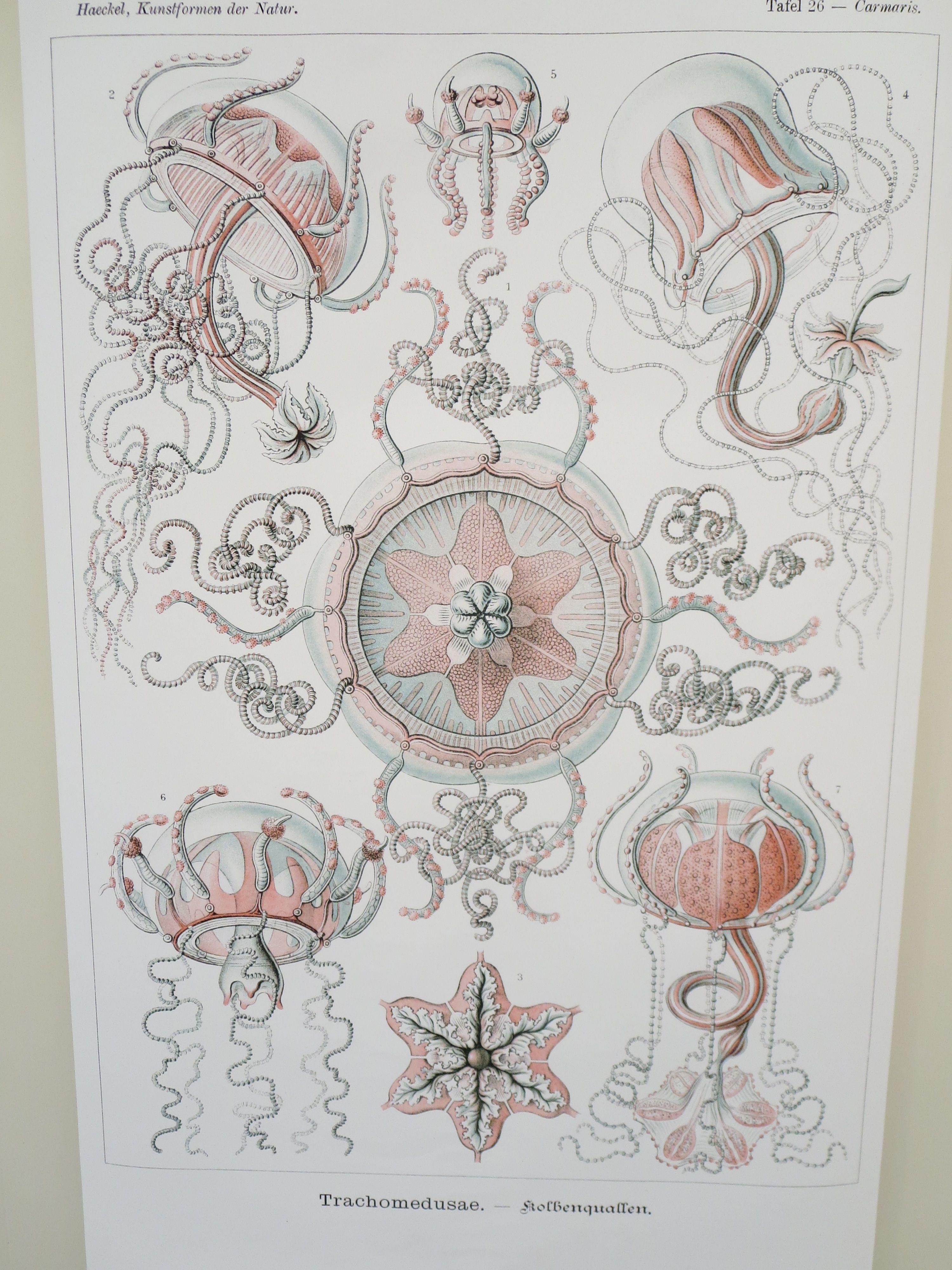 Ernst Haeckel Images