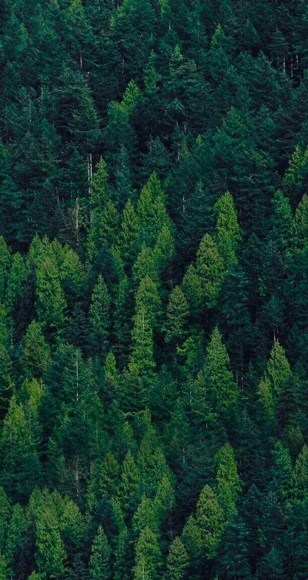 Wallpaper 🇺🇸... By Artist Unknown🇺🇸... Tree wallpaper
